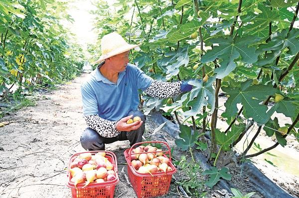 汛后农业 生产恢复忙